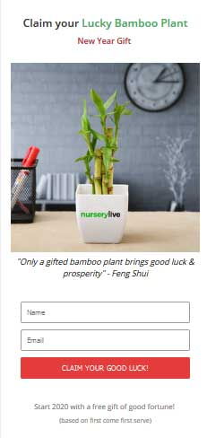 nurserylive free bamboo plant